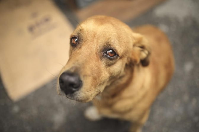 Crime de maus-tratos a animais qualificado - lei 14.064 – primeiros apontamentos