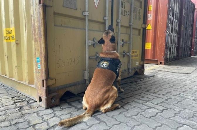 Cão 'Fiscal' encontra 350 quilos de cocaína que iriam para Espanha em porto de SC