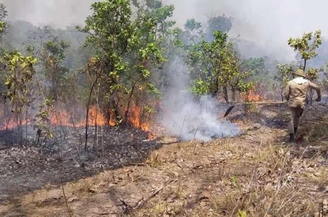 PF investiga responsáveis por queimadas que devastaram mais de 25 mil hectares do Pantanal em MS