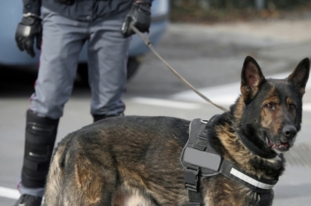 Justiça autoriza que drogas apreendidas pela PM sejam usadas para treinamento de cães farejadores